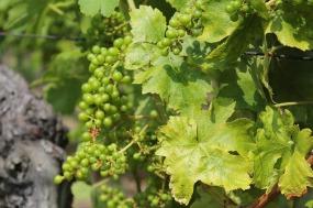 wine-487008_640